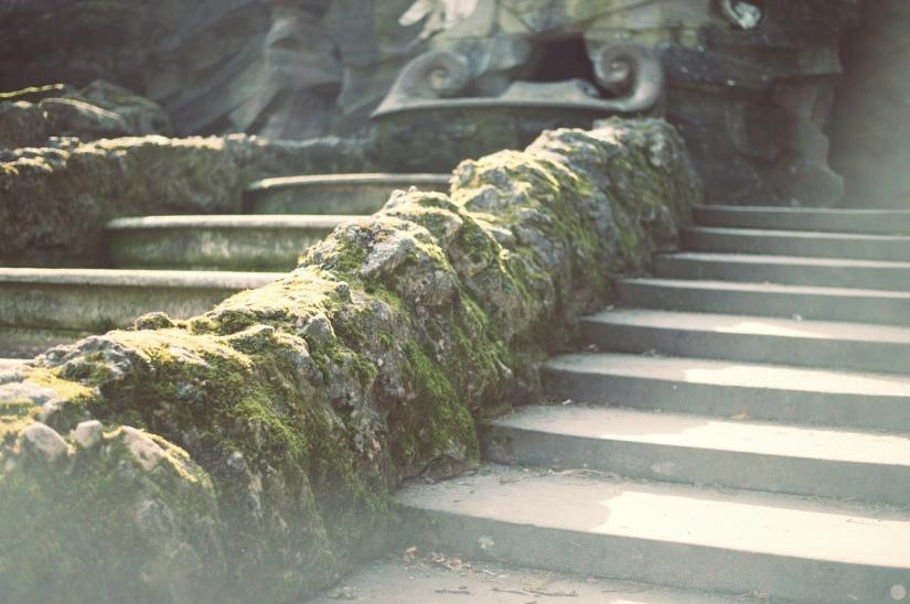 dunkelkammerkunst_red-leaf-redwood