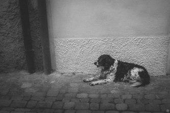 2014-online_0861_sidewalk-break_001