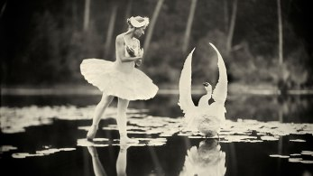 giba_artikelbild_timmermans_swan-lake
