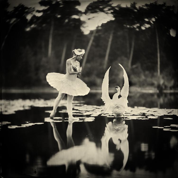 giba_timmermans_swan-lake_image