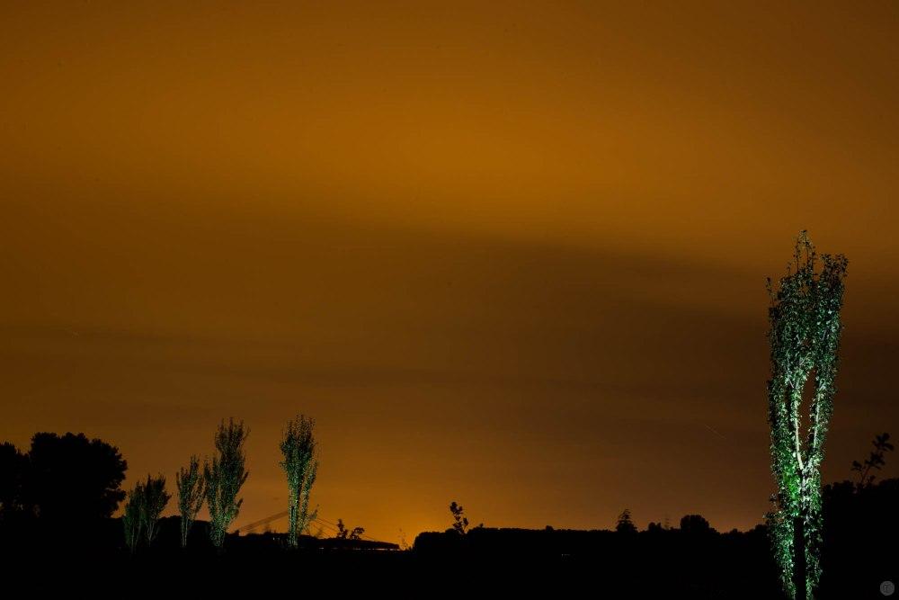 2014-online_0880_green-torches_001