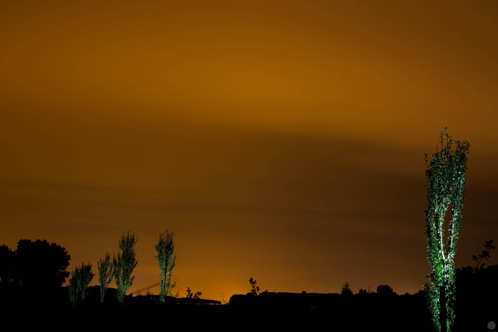 2014-online_0880_green-torches_001