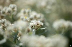 2015-online_1316_hands-on_zeiss-milvus-100mmf2_008