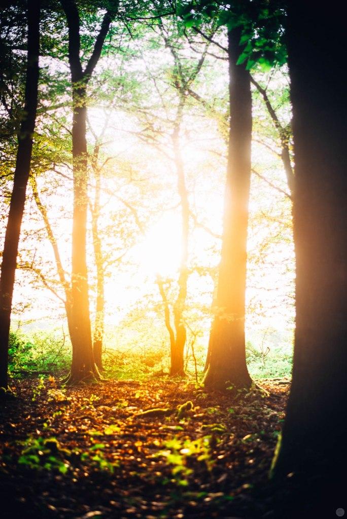 2014-online_0875_fiery-trees_002